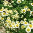 花とミツバチ!